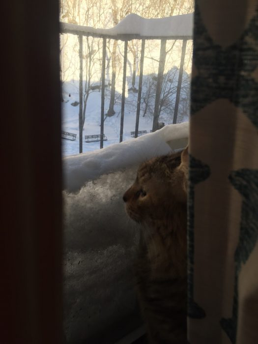 Due to all the snow, my cat, Tanzie, can no longer see out the window. It was one sad afternoon for her.