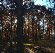 East Woods in late autumn