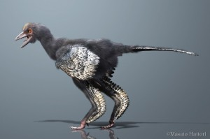 Reconstruction of Aurornis xui, a basal avialan from the Middle/Late Jurassic of China. Credit: Masato Hattori