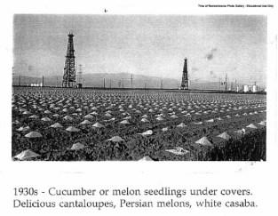 1930's - Planting
