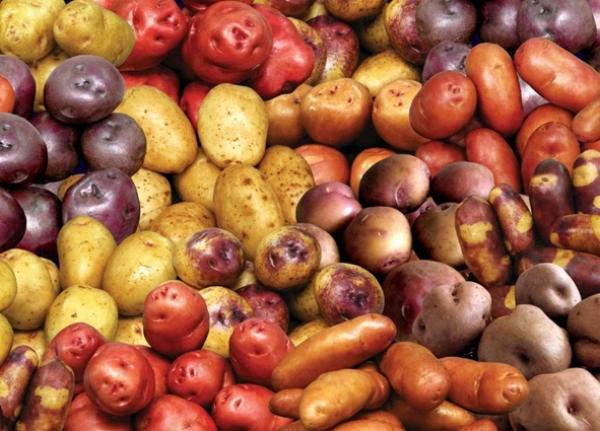 Toms Rueda Rock and Roll poesa y la cocina de mercado