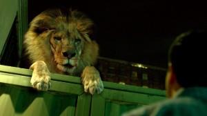 zoo-cbs-peta-james-wolk-billy-burke-critiques-cinema-pel·licules-cinesa-cines-mejortorrent-pelis-films-series-els-bastards-critica