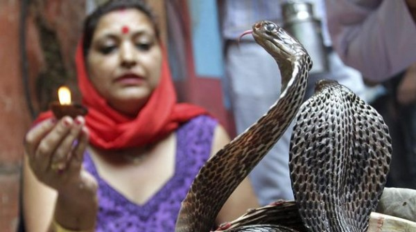 Festival-Serpiente-Jammu-India_TINIMA20130910_0544_18