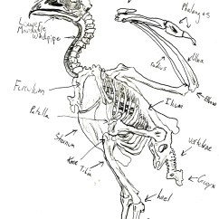 Golden Eagle Skeleton Diagram Bmw X5 E70 Wiring Labeled Of A Bald Cow