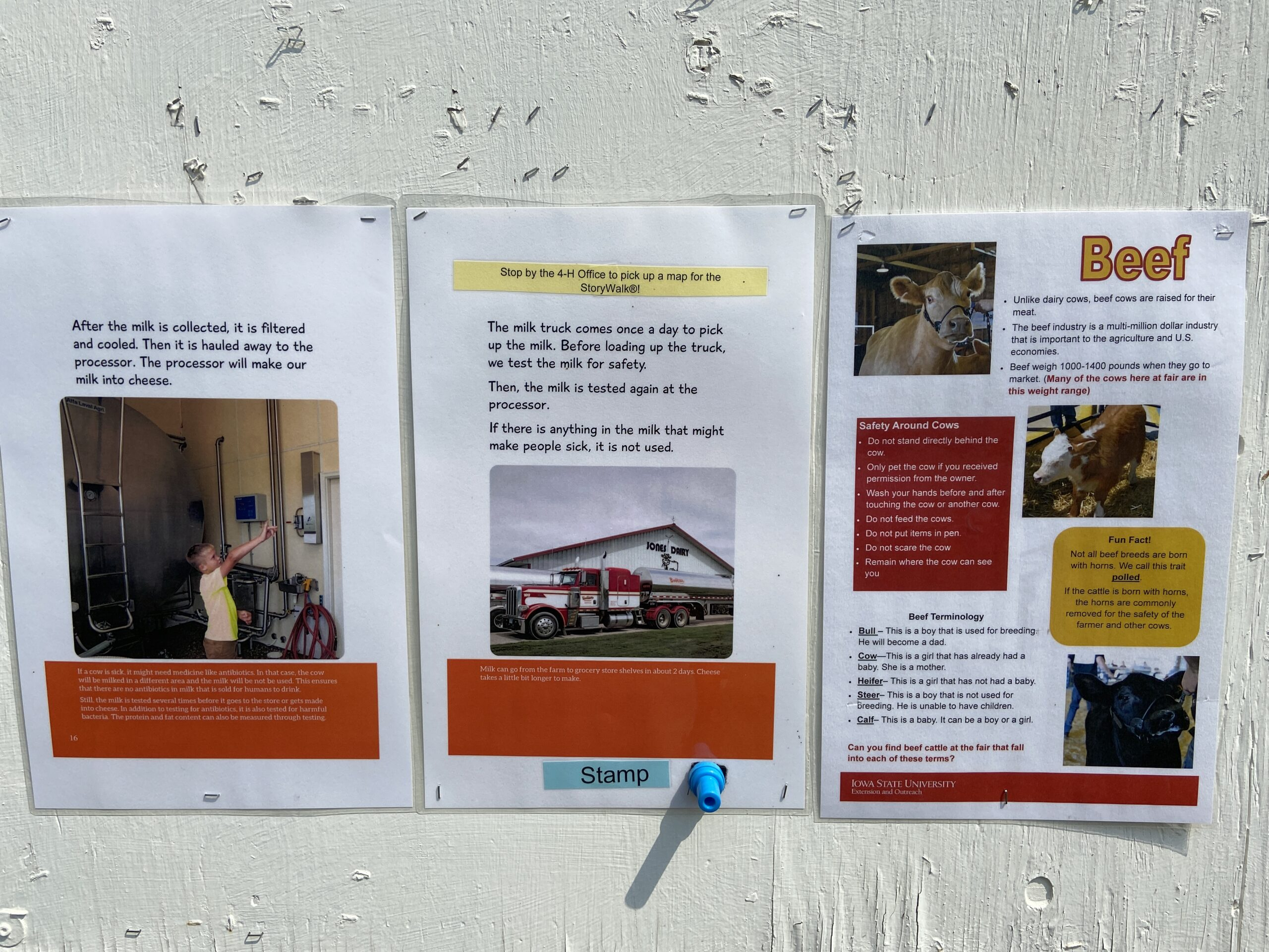 StoryWalk pages with beef informational poster