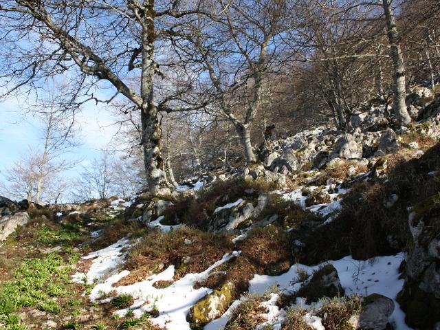 Camino subida por Bosque