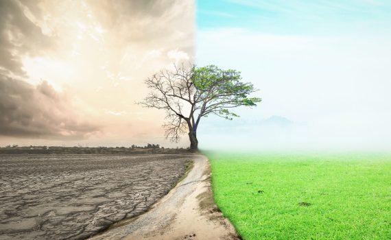 L'aumento dell'inquinamento del suolo compromette la sicurezza alimentare e la qualità igienico-sanitaria del cibo
