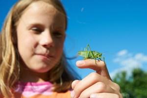 Os insetos desaparecem. Quais as consequências?