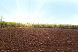 É preciso cuidar dos solos