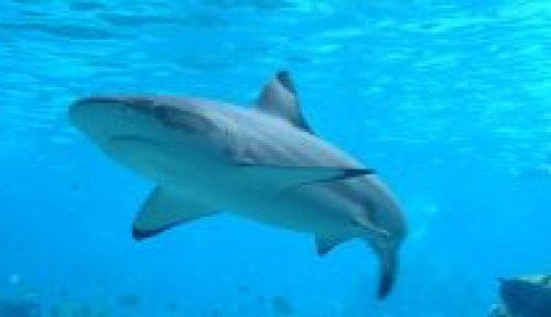funiber-tiburon