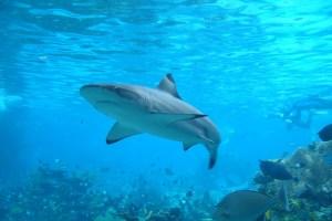 sustancia en el hígado de tiburón permitiría paliar el Parkinson