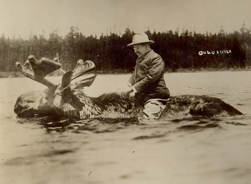 A doctored image of then Presidential candidate Teddy Roosevelt riding a moose