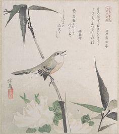 japansingnightingale