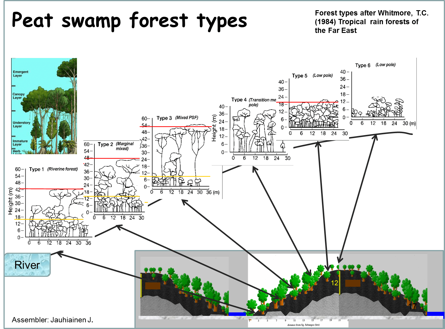 hight resolution of outline of peat swamp forest types after whitmore 1984