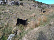 Random cows stared at us as we hiked past