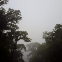 I keep waiting for a pterodactyl to swoop out of the mists.