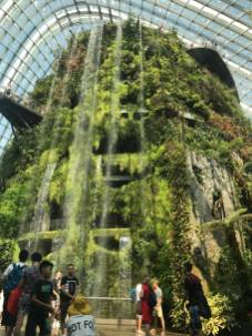 Cloud Forest, lower level