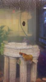 Bubbles and Steve