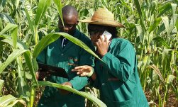 Image result for IITA wants Agriculture as Africa's engine of growth