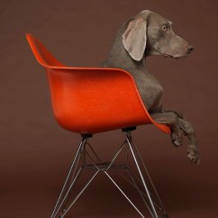 Dog High Chair Kids Chairs William Wegman Pairs His Dogs With End Furniture