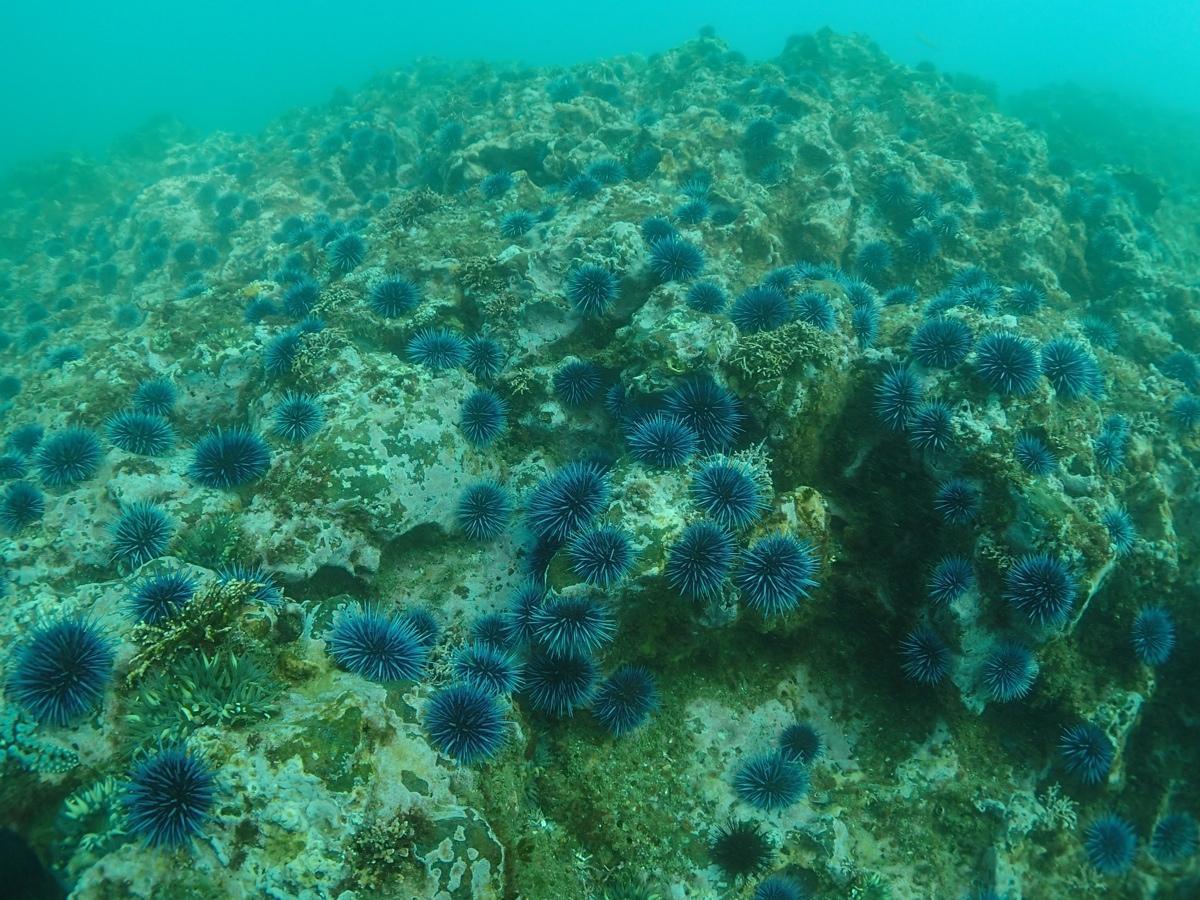 kelp forest food web diagram honda prelude ecu wiring divers restore off palos verdes  one dead sea