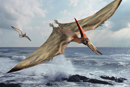 Dibujo de Pterodáctilo, imagen de Some Interesting Facts.