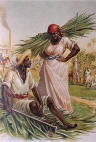 plantaciones de azucar