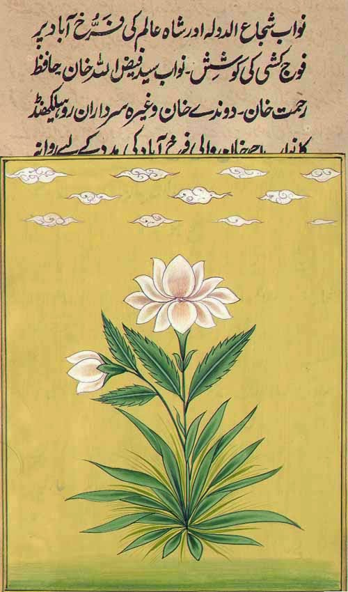 Mughal Floral Miniature mughal_flower_aa63