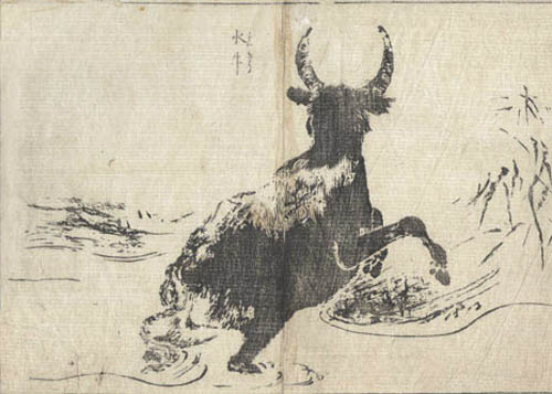 morikuni_tachibana_water_buffalo