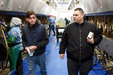Vicar David Blas, right, talks with Luis Romero as they walk through the milking parlor at a dairy farm where Romero is manager in rural Sheboygan County, Wis. Blas is missionary-at-large at LCMS Sheboygan County Hispanic Outreach and St. John Lutheran Church of Plymouth, Wis.