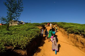 Members walk to Zion Lutheran on the Oliphant Tea Estate in Nuwaraeliya, Sri Lanka.