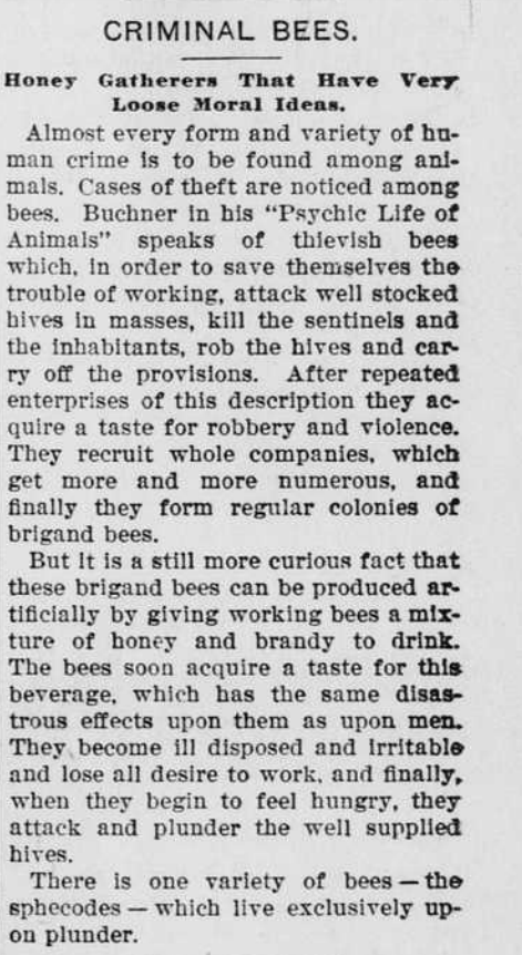 Article about the criminal acts of bees.