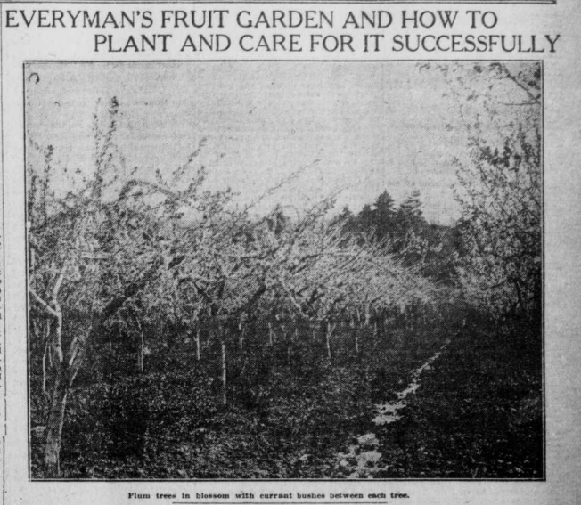 """Image of fruit garden with the heading """"Everyman's Fruit Garden and How to Plant and Care for it Successfully."""""""