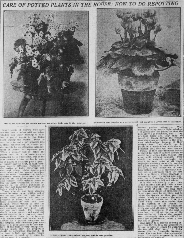 """Images of potted plants with the heading """"Care of Potted Plants in the House: How to do Repotting."""""""