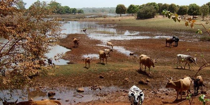 Farmers' vulnerability to climate shocks in Benin