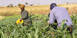 """Climate-Related Impacts Calls For A """"Pro-Poor Stance"""" Agricultural Policy"""