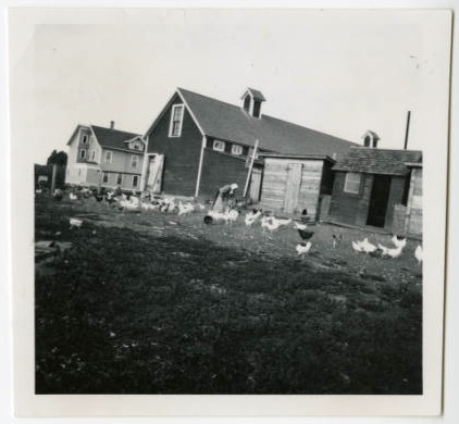 Chicken_yard_on_Villa_farm_Duluth_Minnesota