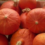 Mots croisés des légumes