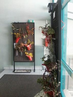 floraisons & fructifications d'automne 4