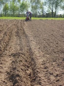 Ouverture des sillons au motoculteur