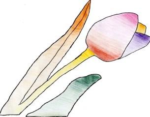 tulipe_une