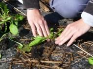 Plantation1
