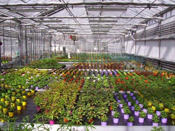 Notre production de plantes en pots