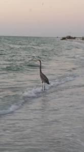 north-beach-bird