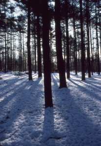 pine grove 1987