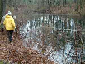 the big Vernal Pool