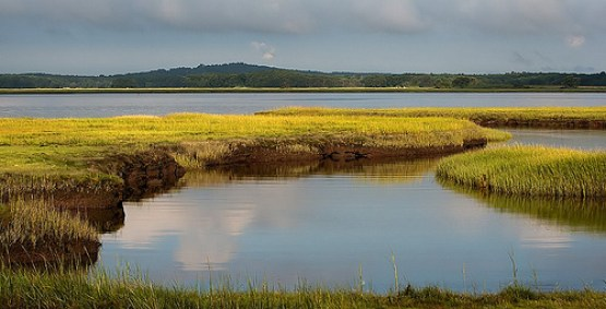 Wetlands serve as natural floodplains