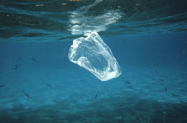 Plastic bags that end up in oceans eventually break down and can be mistaken by fish for food. Photo credit: NOAA