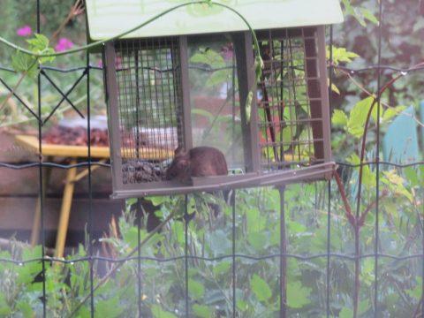 VoederhuisjeBijna iedere dag is het voedhuisje leeg, noten, zaden en gedroogde wormen voor de vogels