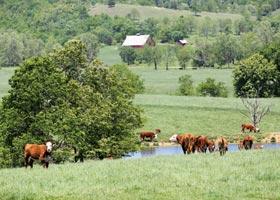 Journagen Ranch